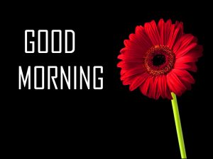 Flower Good Morning Photo Pictures In HD Download