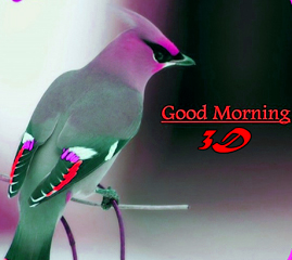 Good Morning 3D Photos Pictures Wallpaper In hd