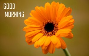 Flower Good Morning Wallpaper For Whatsaap
