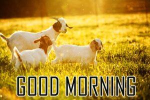 Animal Good Morning Images Photo Pics HD Download