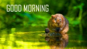 Animal Good Morning Images Wallpaper Pictures Download
