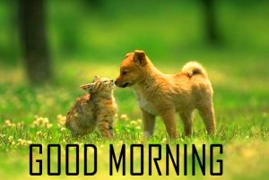 Very Cute Animal Good Morning Images