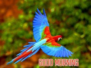 Animal Good Morning Images Photo Download