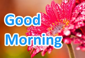 Good Morning Images Wallpaper For Her HD Free Download