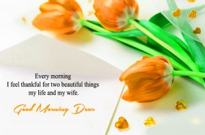 Flower HD Good Morning Photo Pictures Download