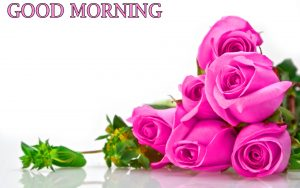 Good Morning Photo Pictures With Flower Red Rose