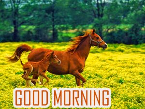 Animal Good Morning Images Photo Pictures Download