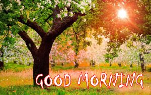 HD Good Morning Photo Pics Download