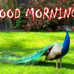 183+ Download The Good Morning Images