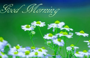 Free Best Happy Good Morning Wallpaper For Whatsaap