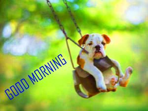Dog Puppy Animal Good Morning Images