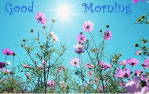 Flower Free Good Morning Images Photo Download