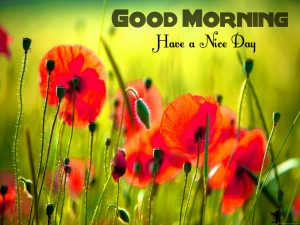 Free Best Happy Good Morning Pictures For Whatsaap Download
