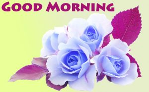 Rose Good Morning Images Photo Download