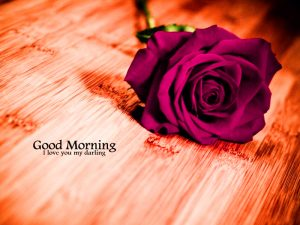 Free Best Happy Good Morning Photo With Red Rose