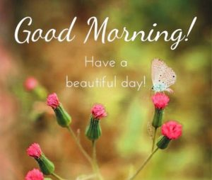 Free Best Happy Good Morning Photo HD Download