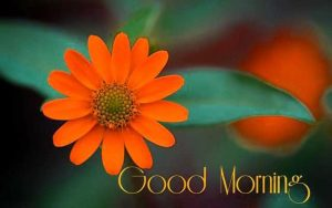 Free Flower HD Good Morning Images Pics Download