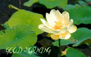 Flower Good Morning Images Pictures Download