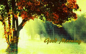 Top Good Morning Images Photo Pictures For Whatsaap