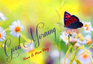 Free Best Happy Good Morning Images Photo Download