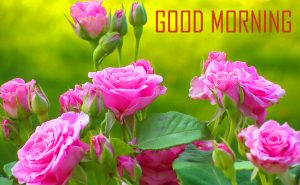 Morning Photos Pictures Wallpaper HD Download
