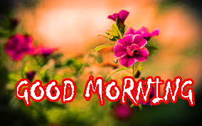 Top Good Morning Photo Pictures Free Download