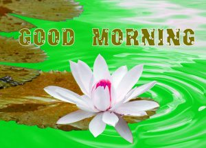 Unique Good Morning Images Photo Pictures Download
