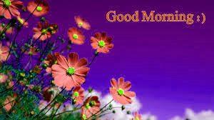 Flower HD Good Morning Images Download