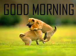 Animal Good Morning Images Photo Pics For Facebook