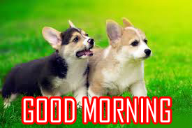 Animal Good Morning Images Photo Wallpaper