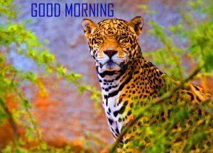 Animal Good Morning Images Wallpaper Download