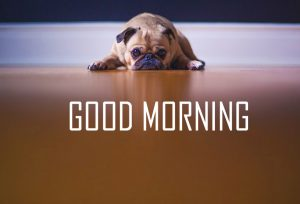 Animal Good Morning Images Photo Pictures HD