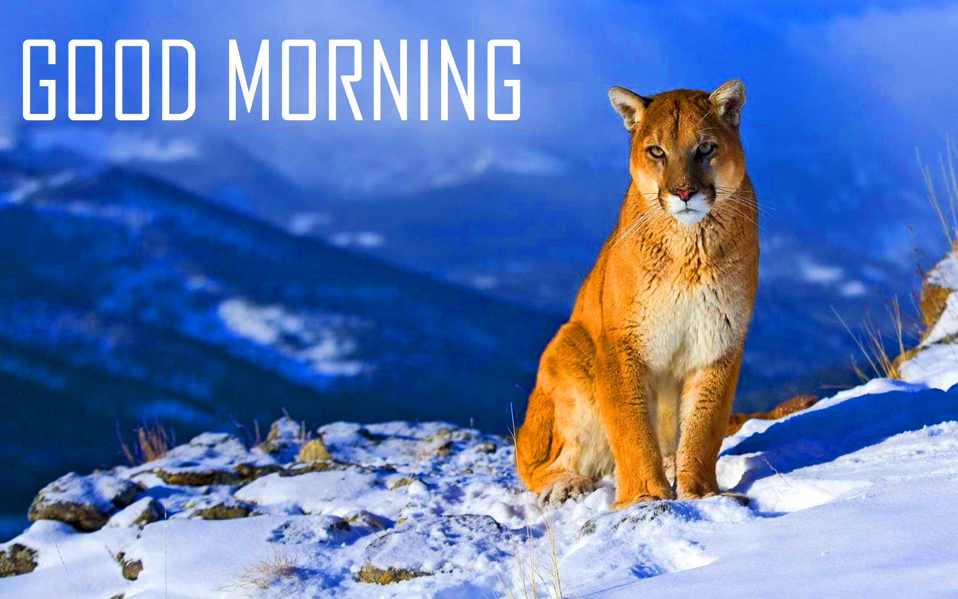 189+ Animal Good Morning Images Photo Pictures Download