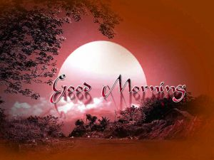 Free Best Happy Good Morning Photo Download