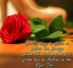 Hindi Shayari Bewafa Images Photo Pics With Red Rose