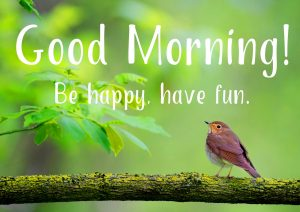 Very Beautiful Good Morning Images Photo Pictures For Facebook HD Download