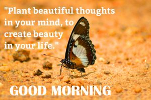 Good Morning Thoughts Images Pictures Free Download