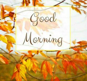 HD Good Morning Images Photo Pictures HD Download
