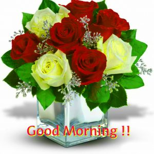 HD Good Morning Images Photo Pics With Red Rose