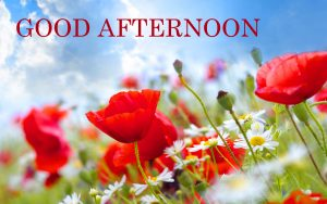 Good Afternoon Images Photo Pictures With Red Rose
