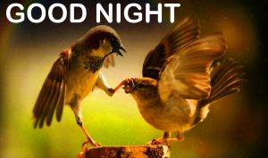 Funny Good Night Images Wallpaper Pictures Download