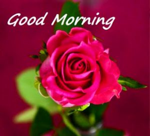 HD Good Morning Images Photo Pictures With Red Rose