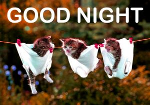 Funny Good Night Images Photo Pictures Download
