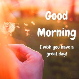 Facebook & Whatsaap Good Morning Images Images Wallpaper Pictures Download