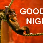 190+ Funny Good Night Photos HD Download