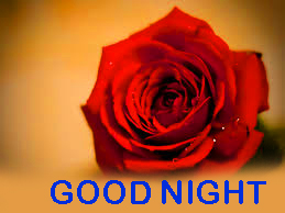 Romantic Good Night Images Photo Pictures With Red Rose