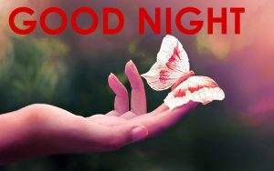 Cute Good Night Images Photo Pictures Download For Whatsaap