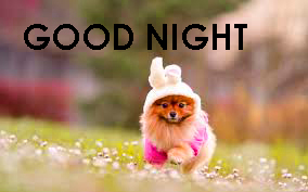 Cute Good Night Images Photo Pictures For Whatsaap