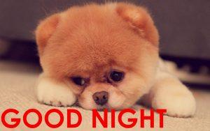 Cute Good Night Images Wallpaper Pics Download