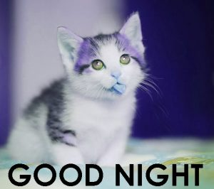 Cute Good Night Images Photo Pics Download In HD